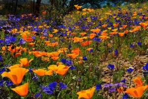 valley-of-flowers-uttarakhand2